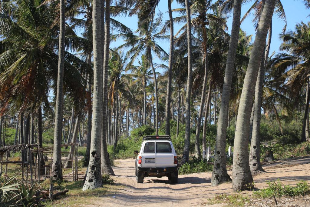 Jeep auf sandigen Strassen umringt von Palmen
